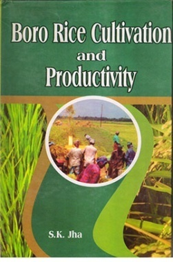 Boro Rice Cultivation and Productivity