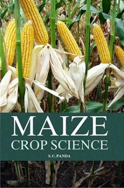 Maize Crop Science
