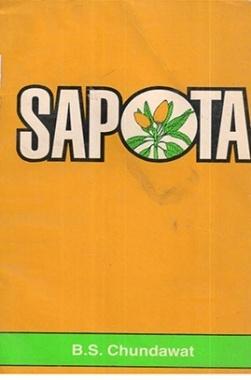 Sapota