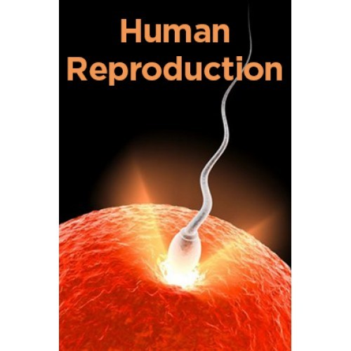 human reproduction notes Revision website designed for as and a level biology students our notes cover the latest aqa specifications.