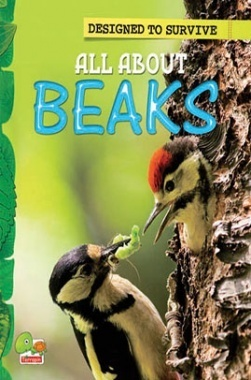 Designed to Survive : All About Beaks