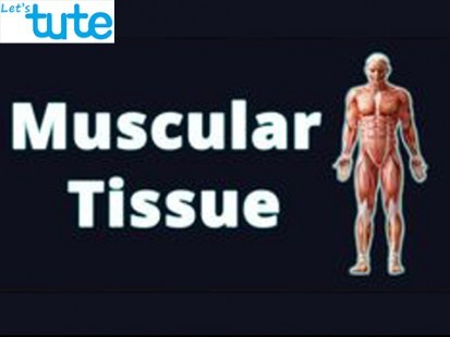 Class 9 Biology - Animal Tissue - Muscular Tissue Video by Let's tute