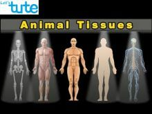 Class 9 Biology - Introduction To Animal Tissues Video by Let's tute