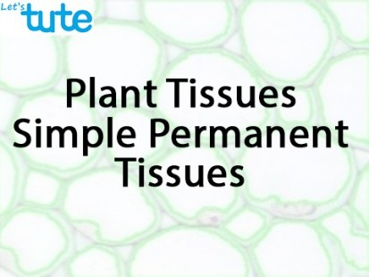 Class 9 Biology - Plant Tissues - Simple Permanent Tissues Video by Let's tute