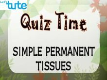 Class 9 Biology - Quiz Time - Simple Permanent Tissues Video by Let's tute